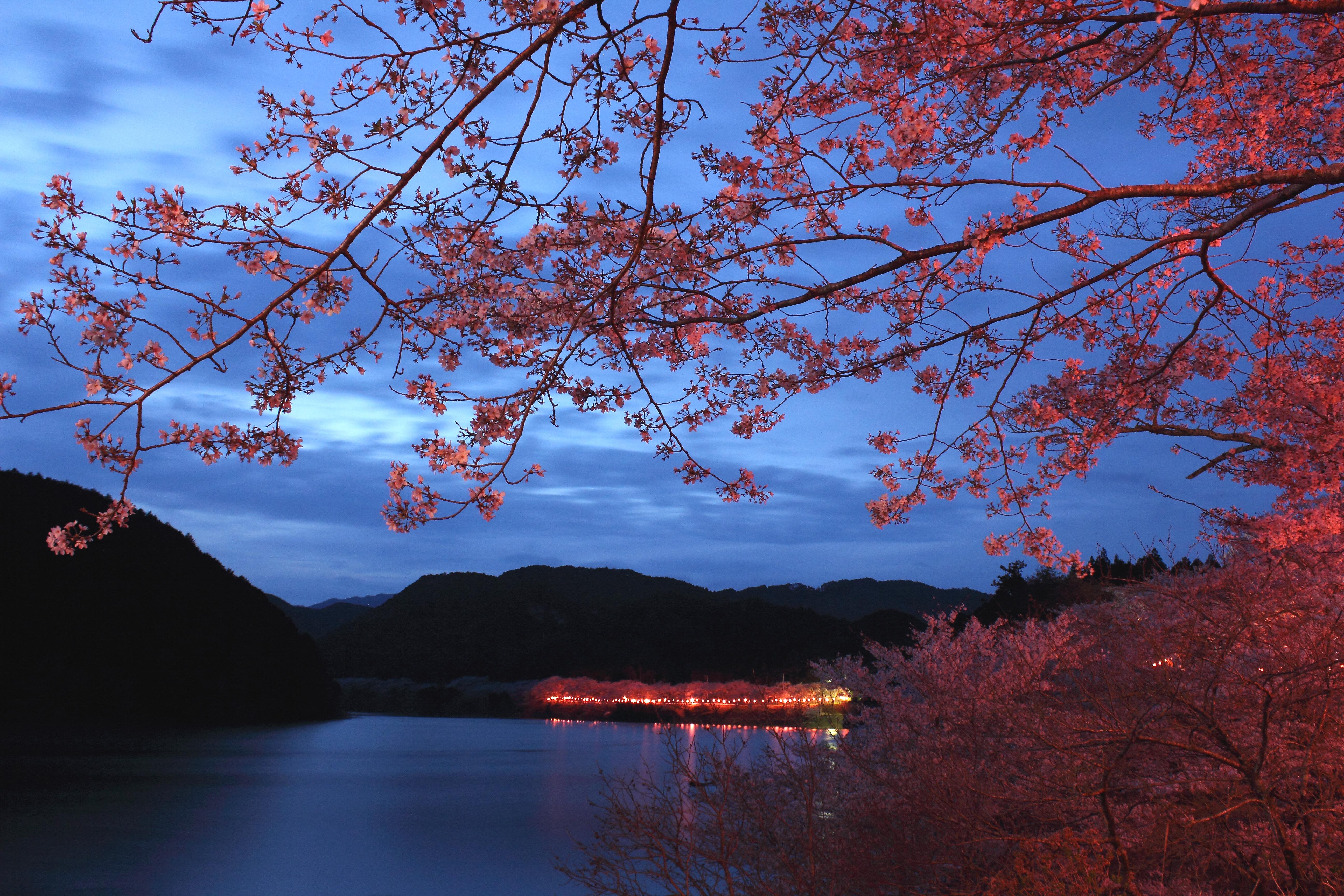 和歌山県古座川町(七川ダム湖畔)