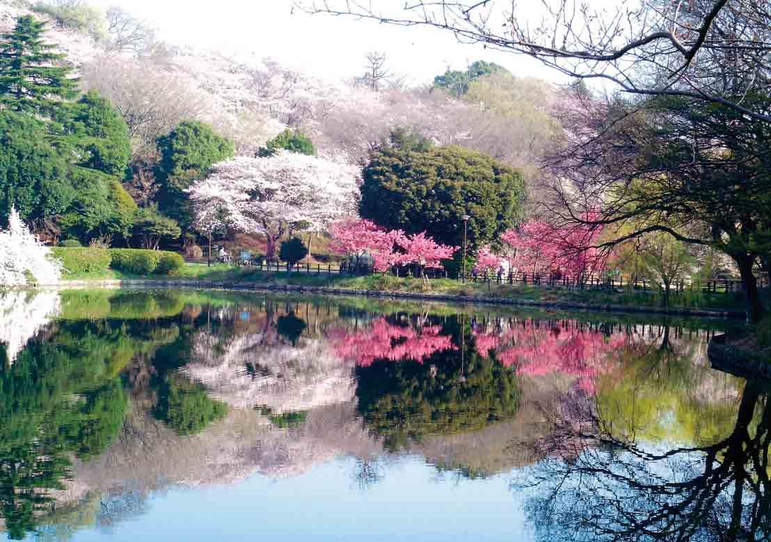 神奈川_三つ池