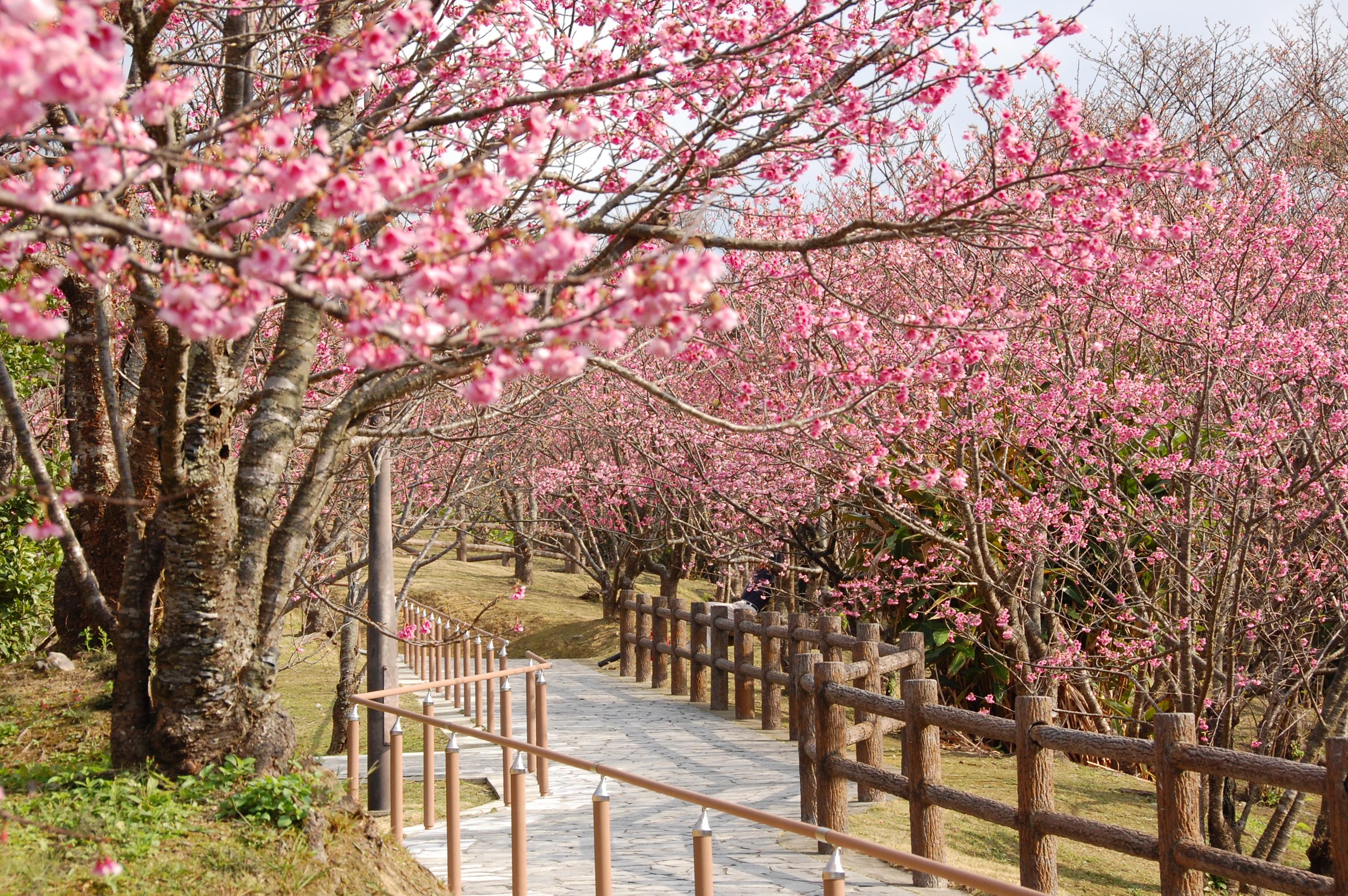 100 沖縄県名護市「名護城公園」