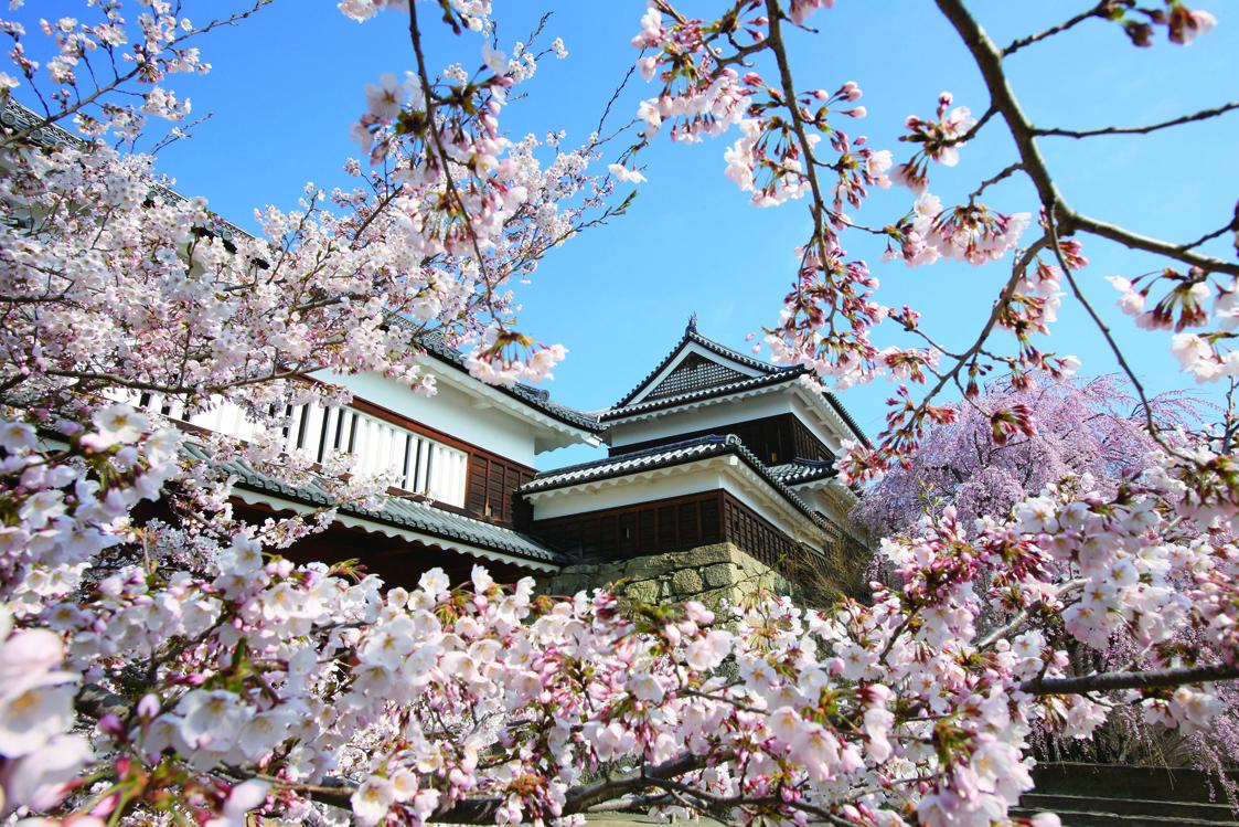 114_長野県上田市上田城跡公園内桜