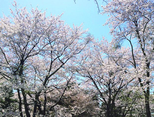 131_青森県六戸町