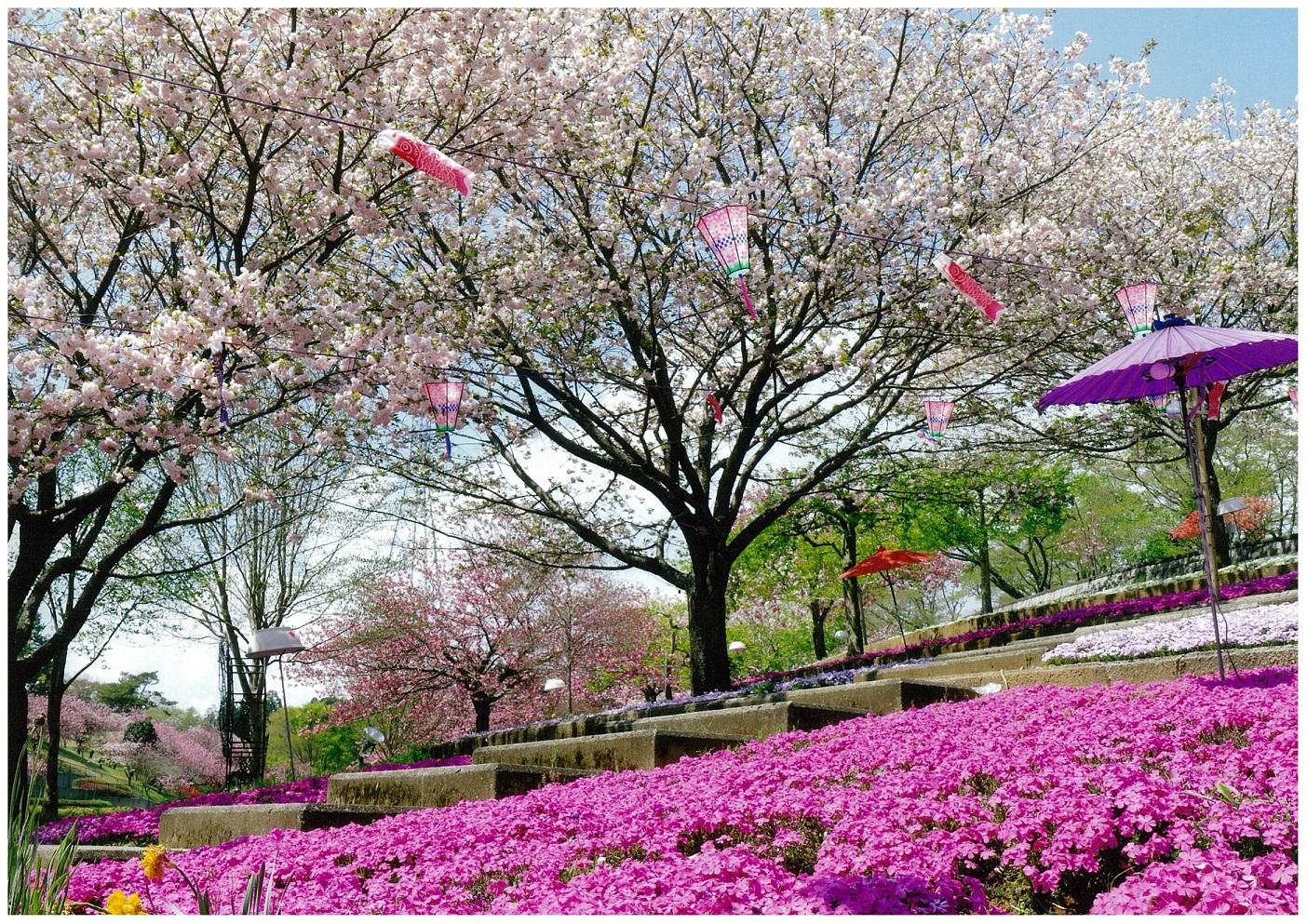 17 茨城県那珂市「静峰公園」
