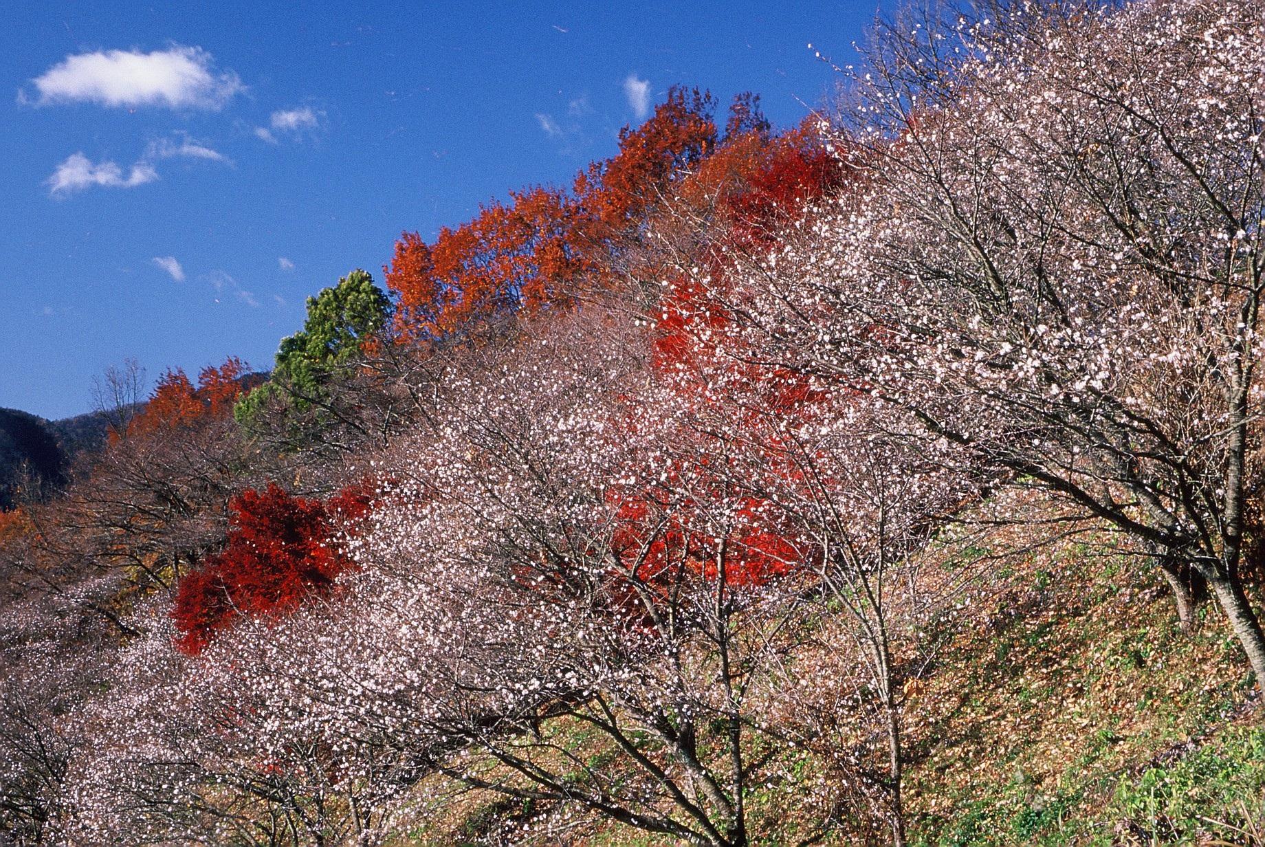 21 群馬県藤岡市「桜山公園」