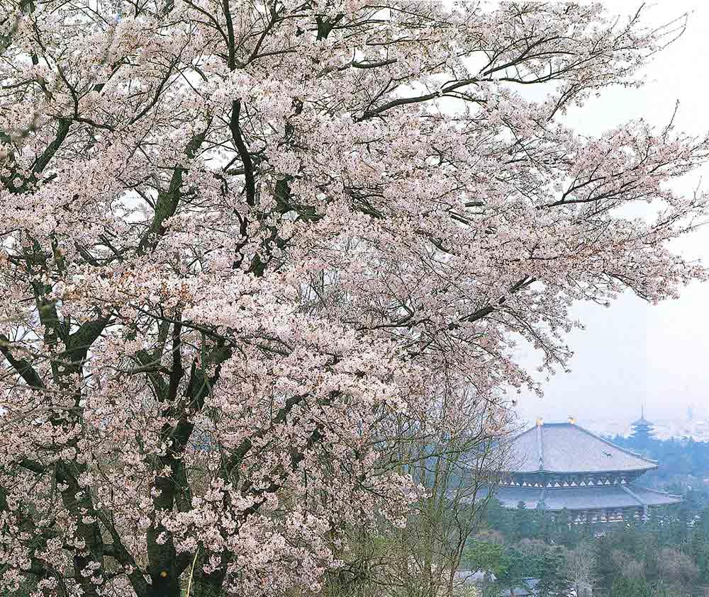24_奈良公園