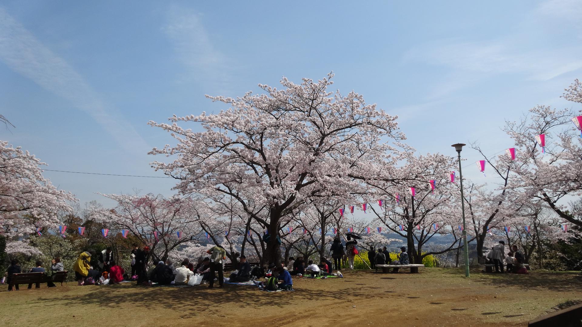 35 神奈川県横須賀市「衣笠山公園」