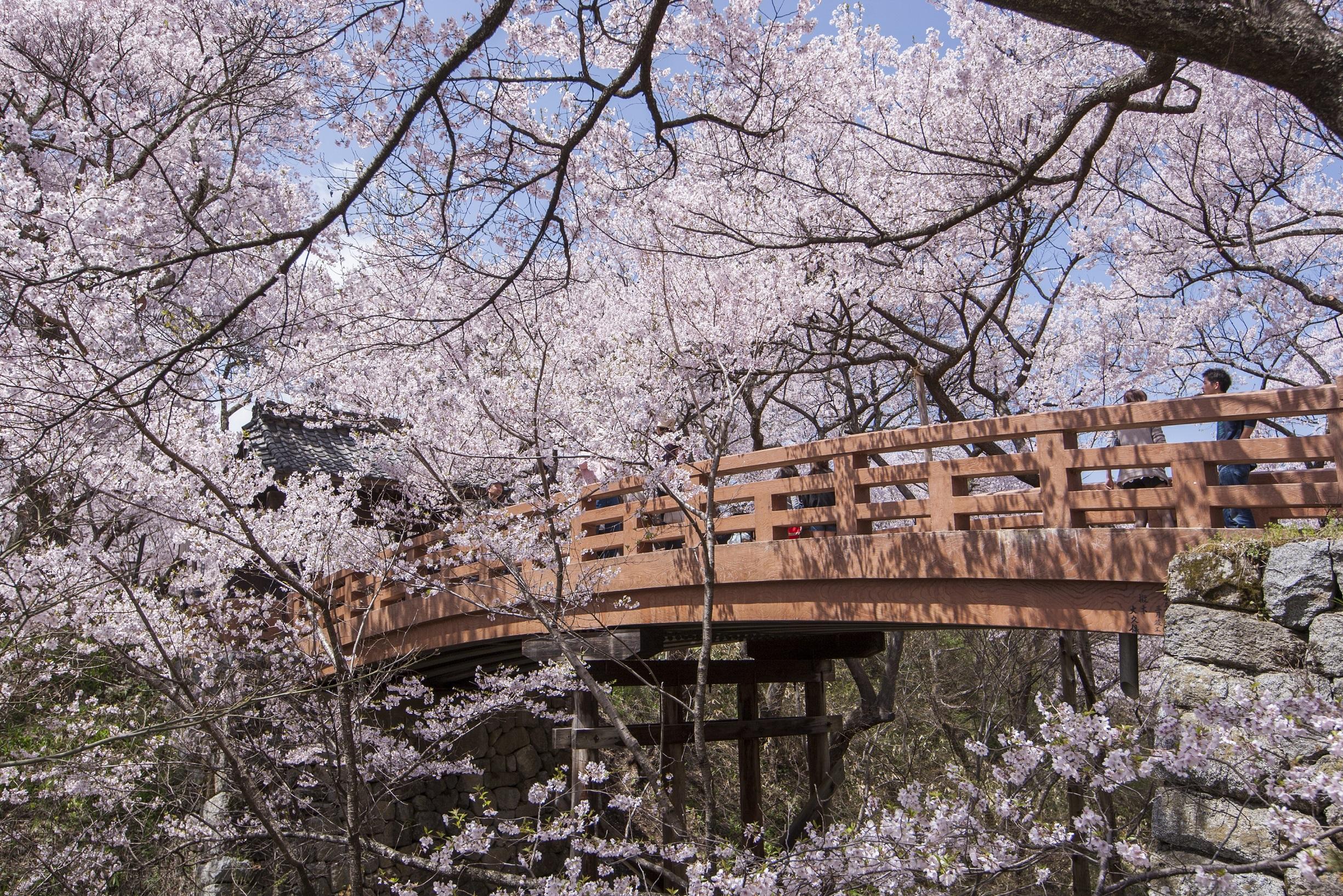 46 長野県伊那市「高遠城址公園」 (2)