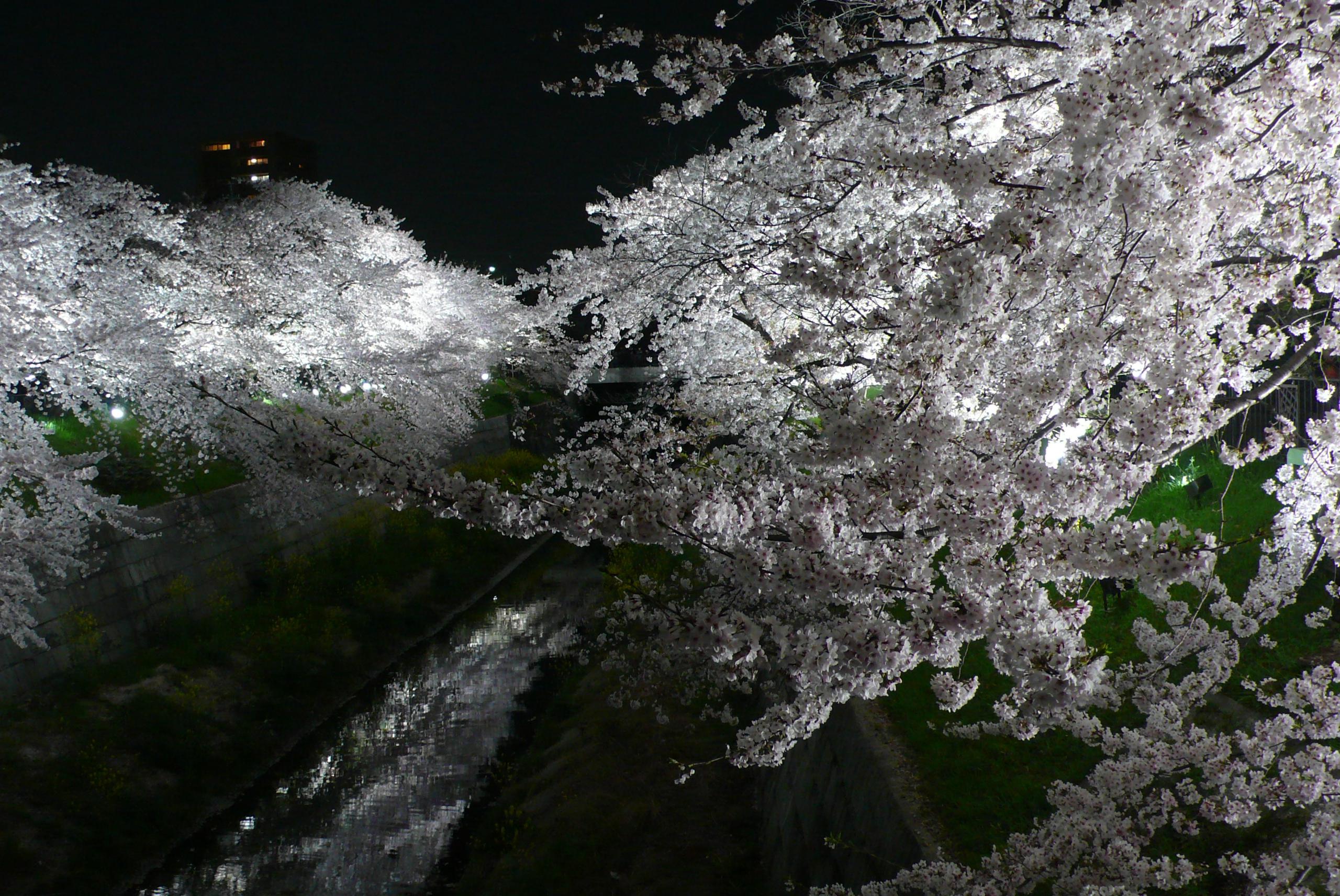 54 愛知県名古屋市「山崎川四季の道」