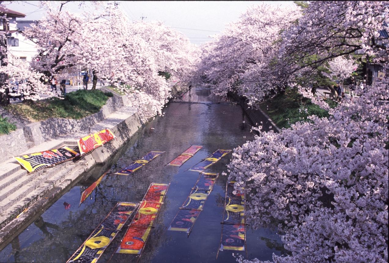 56 愛知県岩倉市「五条川」