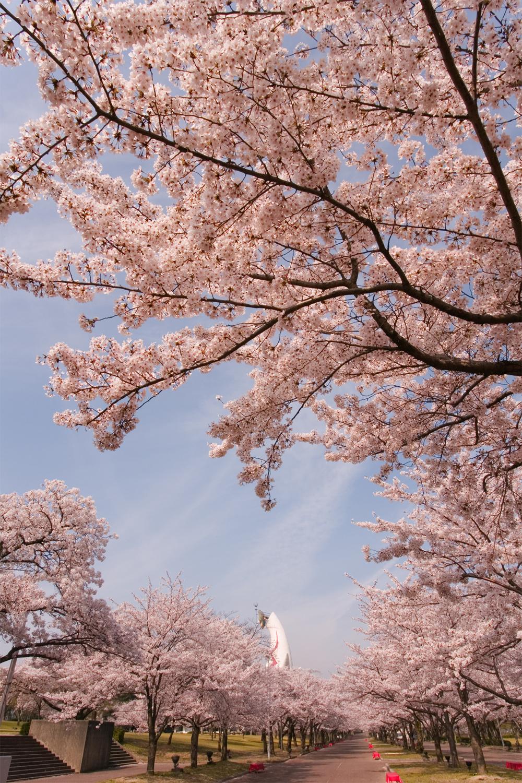 67 大阪府吹田市「万博記念公園」