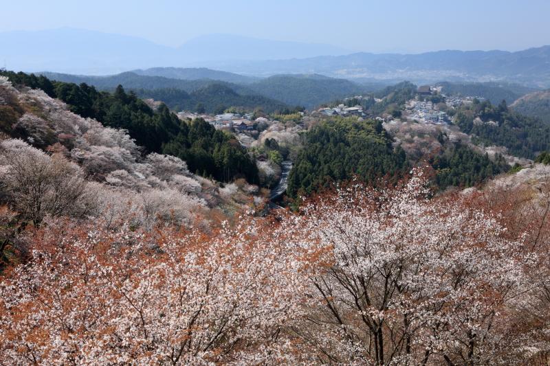 72 奈良県吉野町「吉野山」