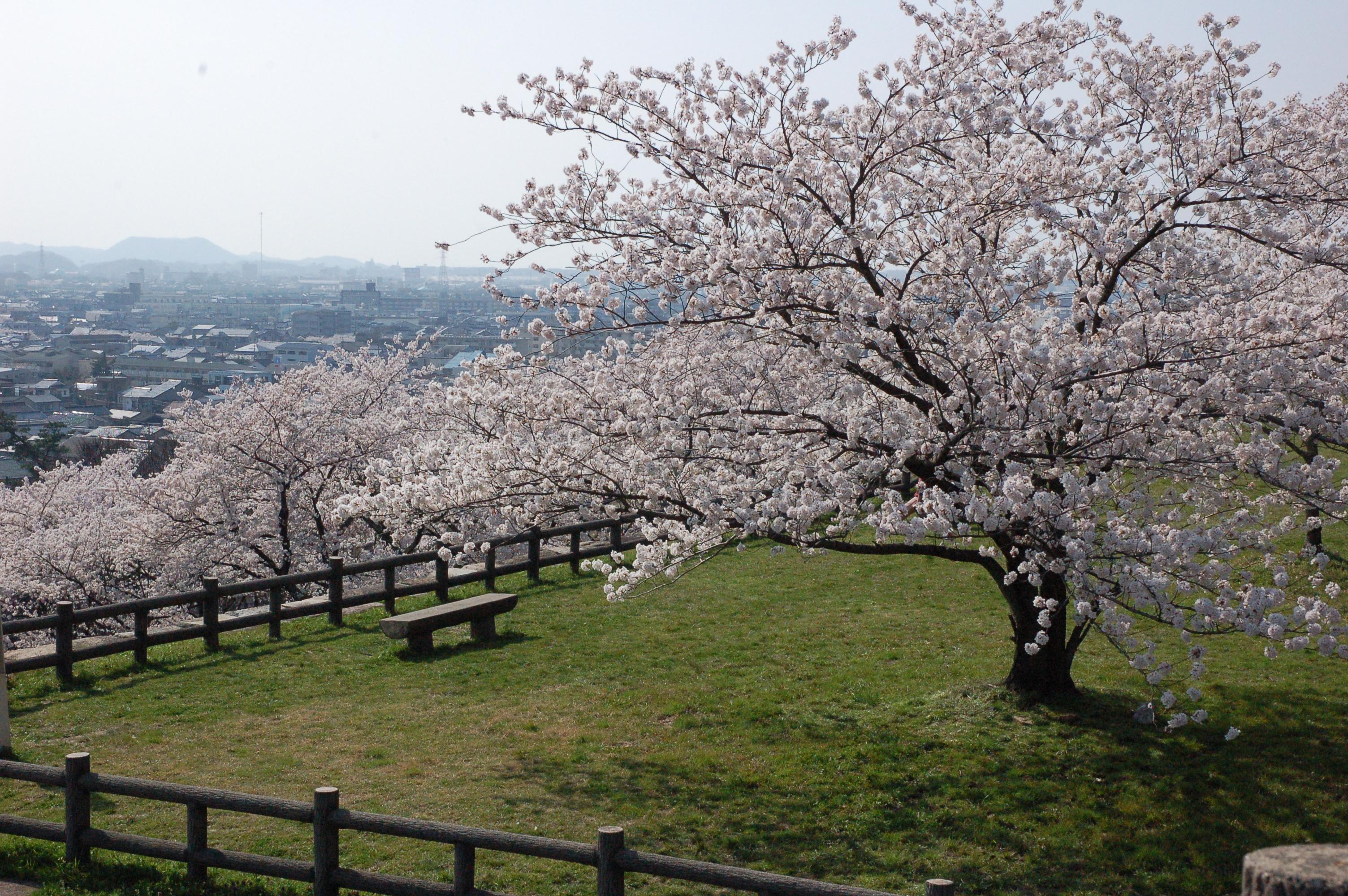 77 鳥取県鳥取市「久松公園」