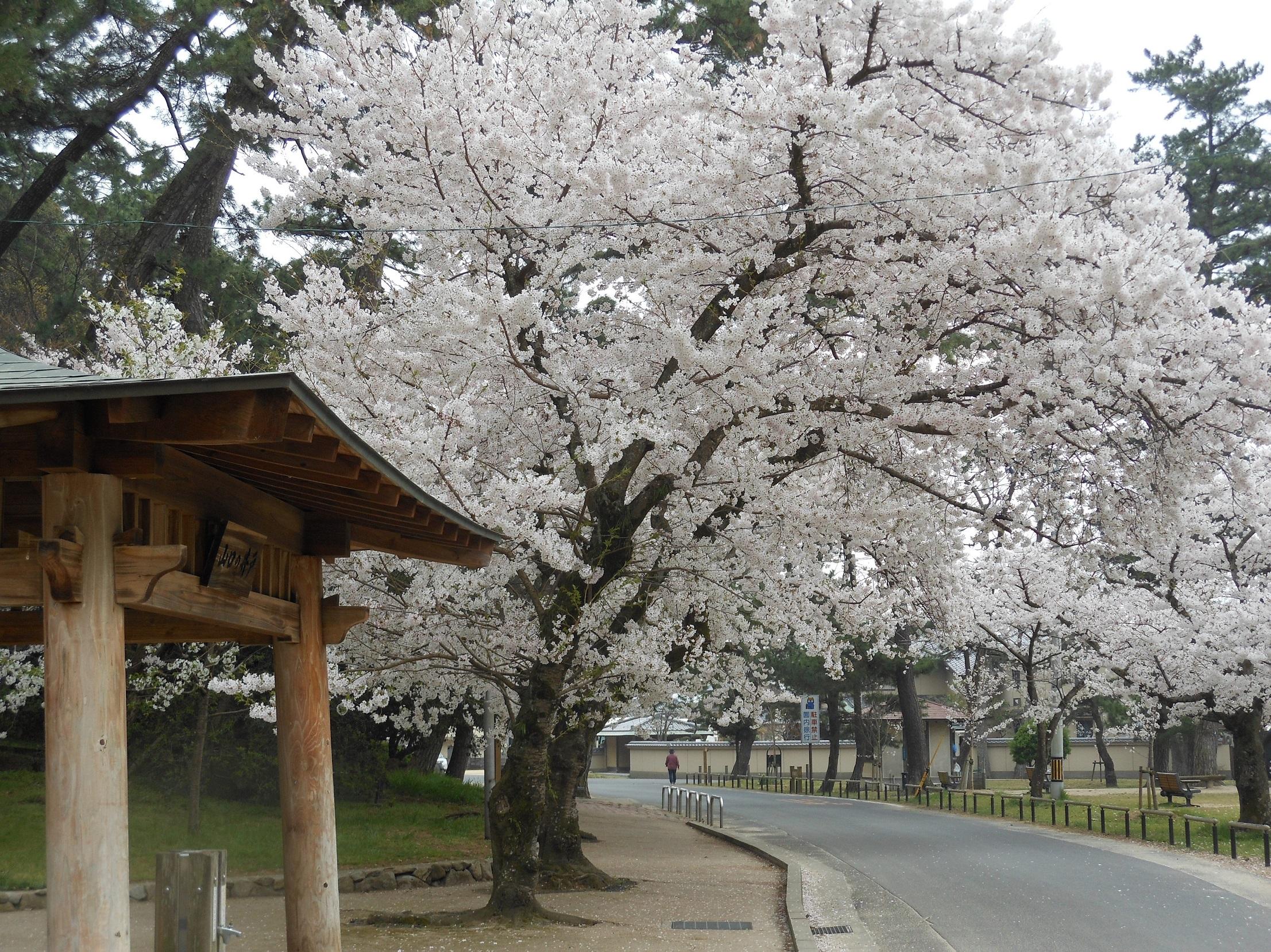 87 香川県観音寺市「琴弾公園」