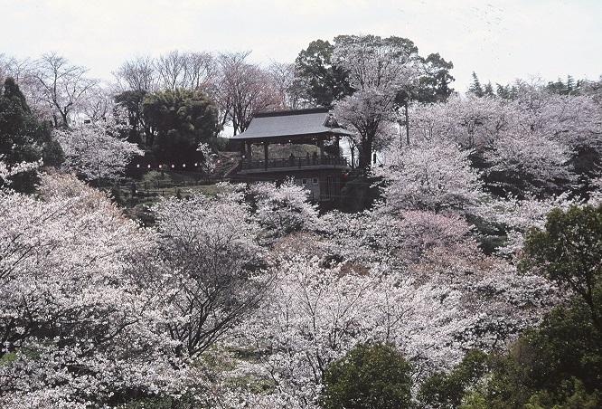 94_菊池公園