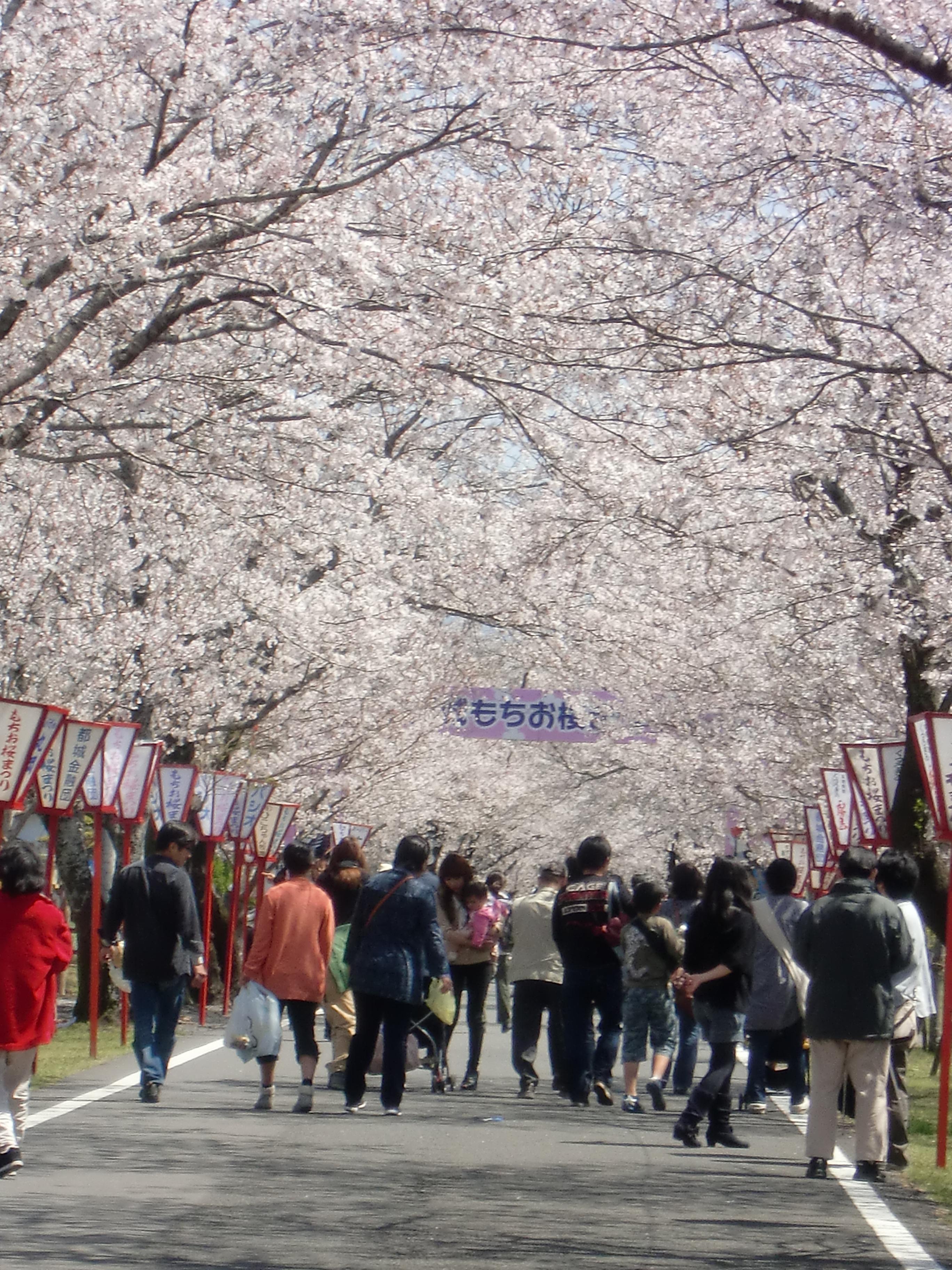 98 宮崎県都城市「母智丘関之尾公園」