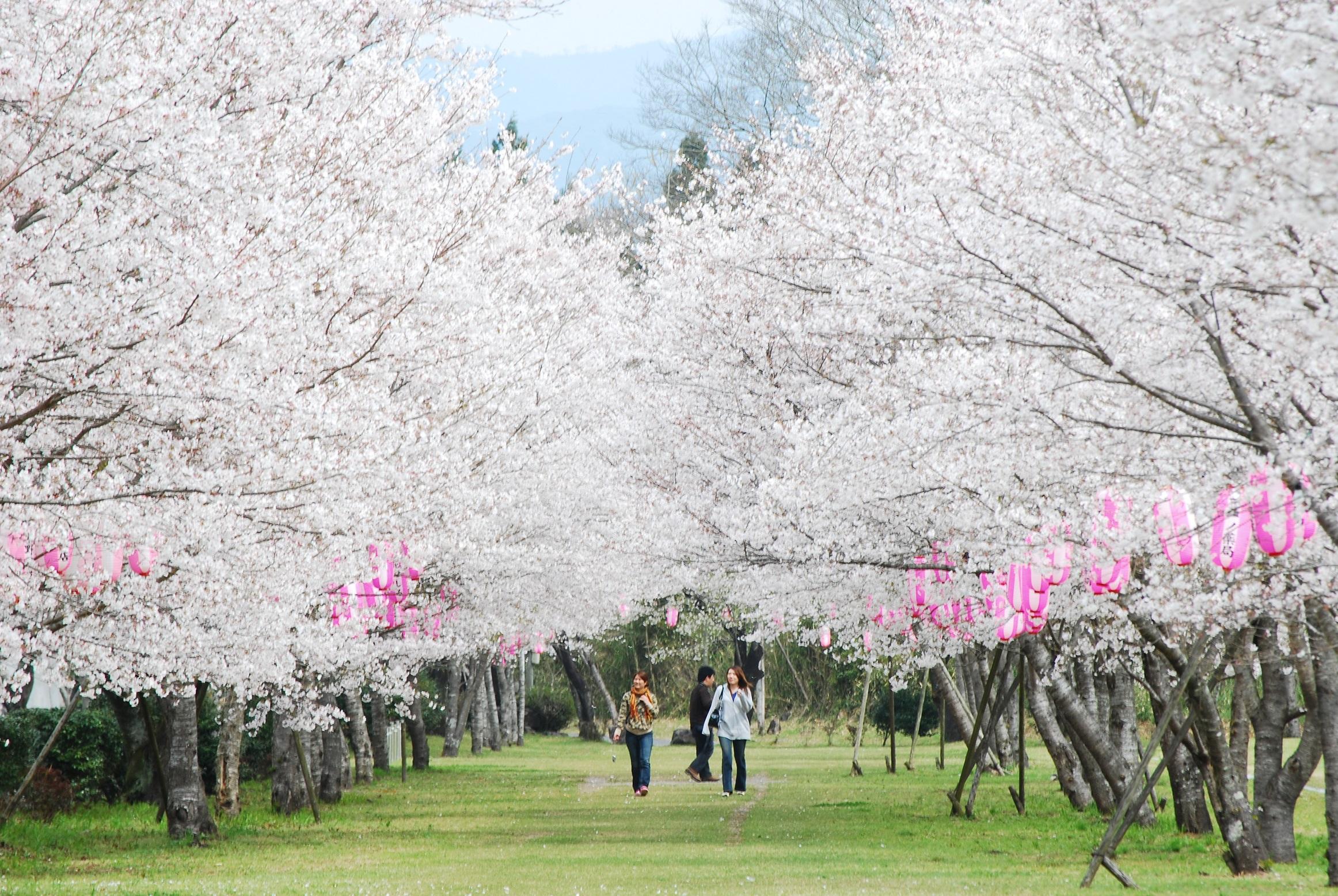 99 鹿児島県伊佐市「忠元公園」